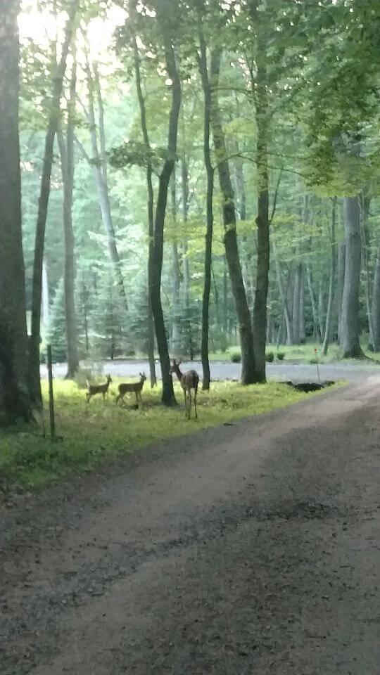 Deer from Dee Dave 6-30-20