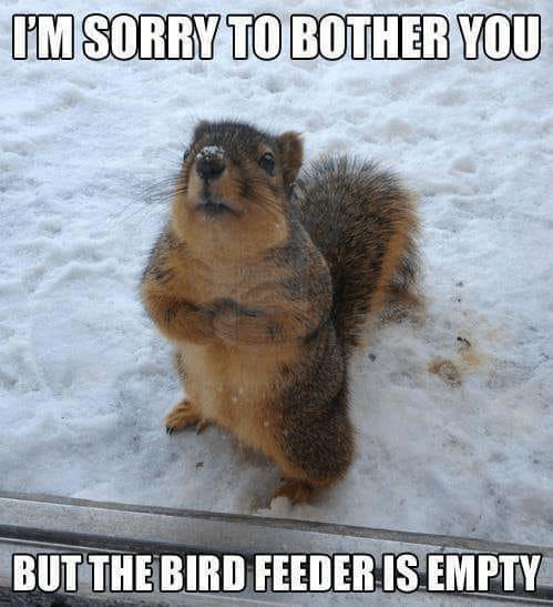Squirrel PSA
