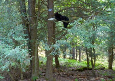 Bill Schmidt Bear at Deep Creek Lake, MD