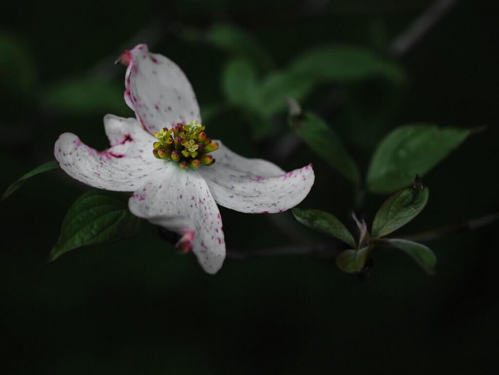 Bloom from Joe Vitek 5-20