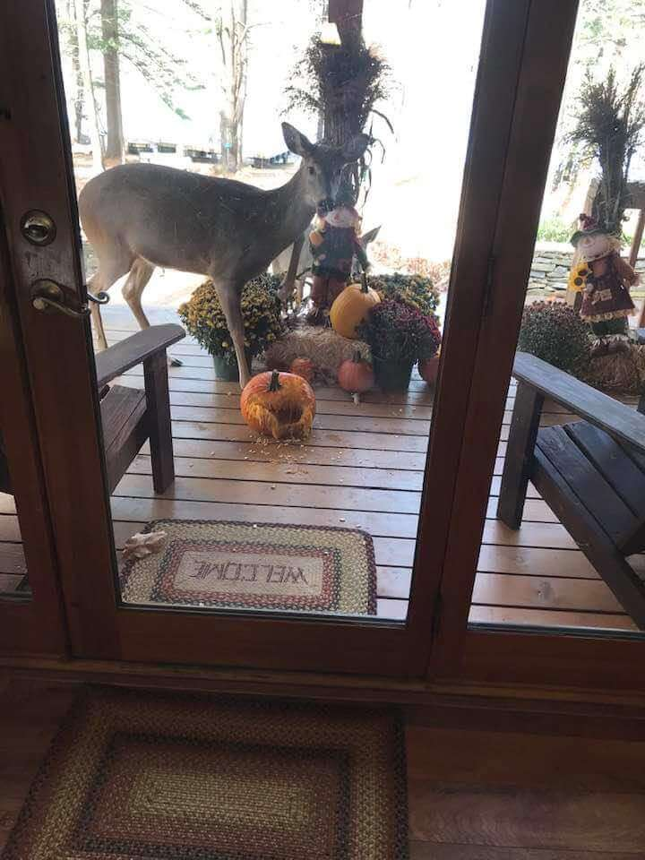 Deer at the Door by Patty O'Leary