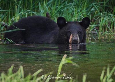 GordonFisher-Bear-at-DeepCreekLake,MD3