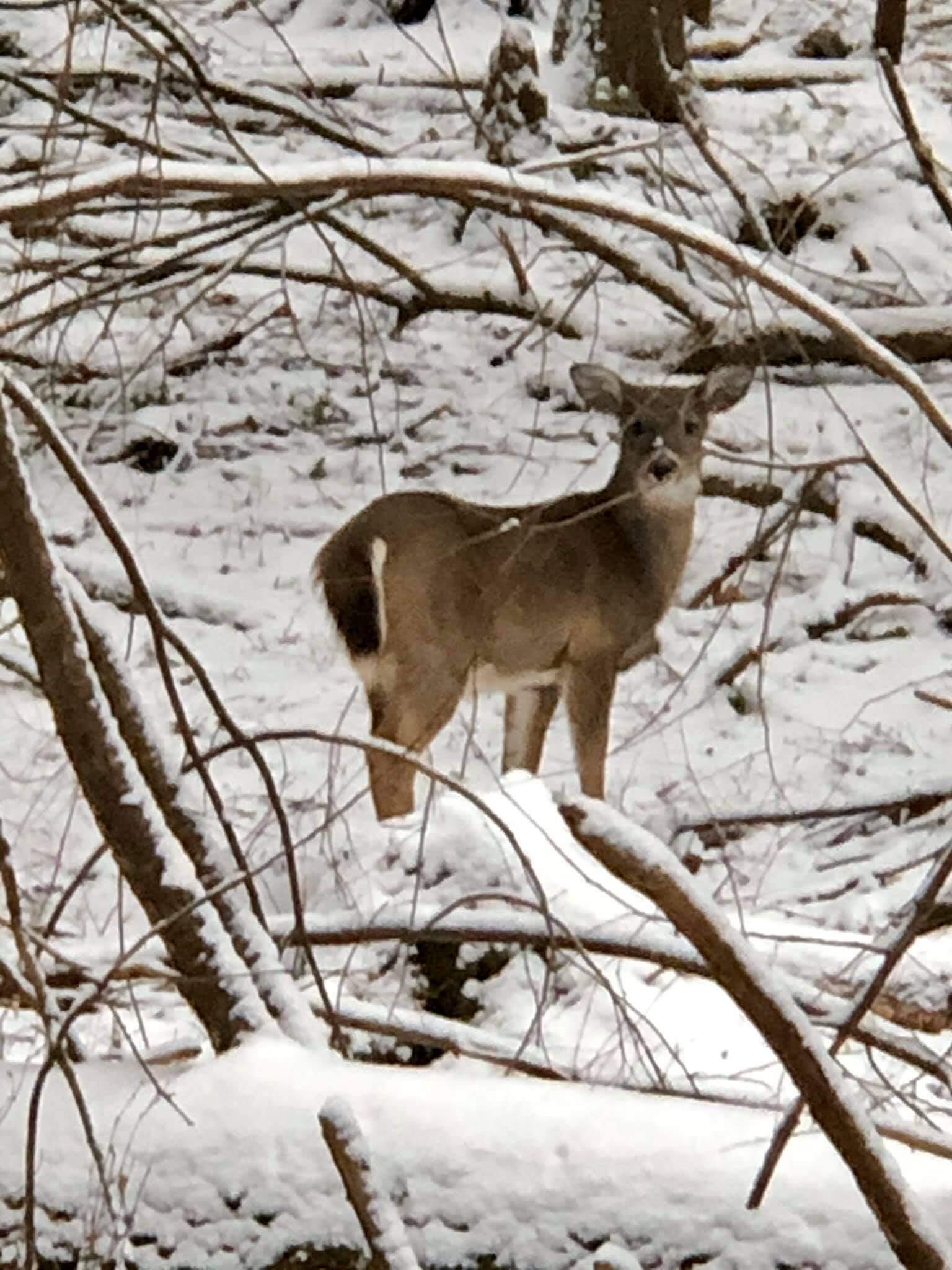 Holly Slusser Kern Deer at Deep Creek Lake, MD