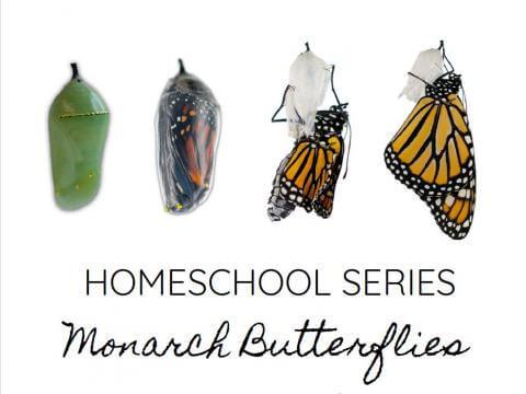 Homeschool Series: Monarch Butterflies