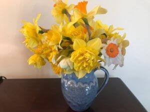 Mike Jean Daffodils