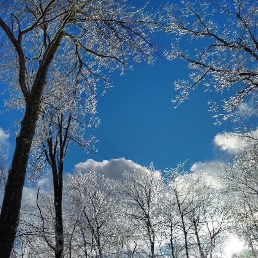 Icy Trees at Deep Creek Lake, MD