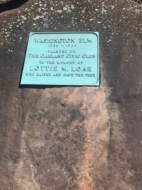 Civic Club tree marker grmc