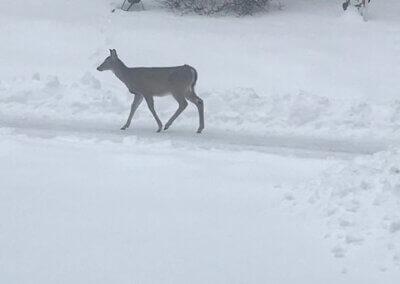 deer dotsissler 2-15-21