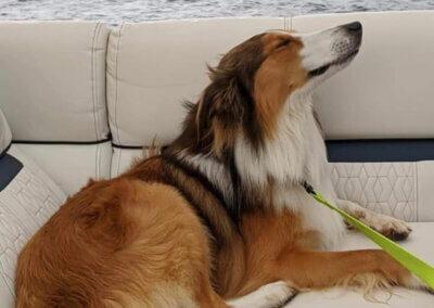 Jessica Price Pups at Deep Creek Lake, MD