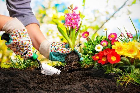 Meet the Good Guys: Beneficial bugs in the Garden