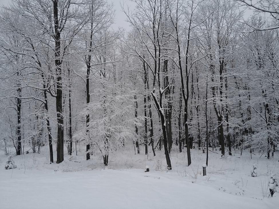Snowy Swanton, MD Near Deep Creek Lake April 2, 2018