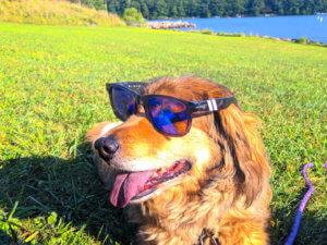 Mitchell Wayne Penny the Dog at Deep Creek Lake, MD
