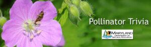 Pollinator Trivia Night