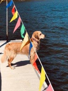 Sarah Gibson Kilbey Dog on Dock at Deep Creek Lake, MD