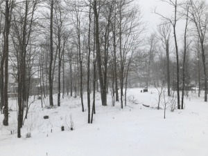 Mike's Backyard in Deep Creek Lake, MD on the first day of spring