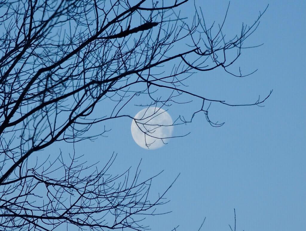 morning moon hana glodfelter